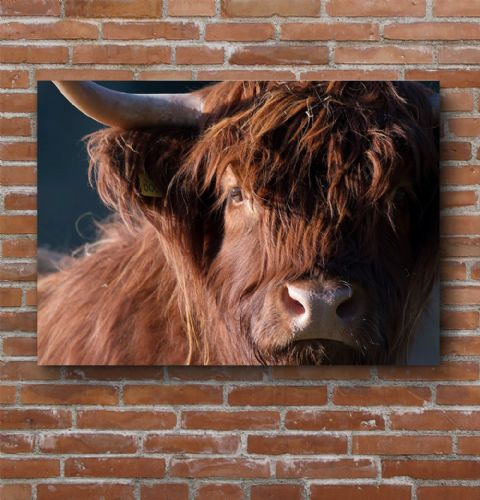 Moody Cow - Highland Cow Premium Canvas Print